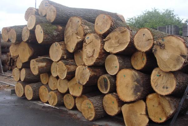 Lựa chọn gỗ làm khung Sofa